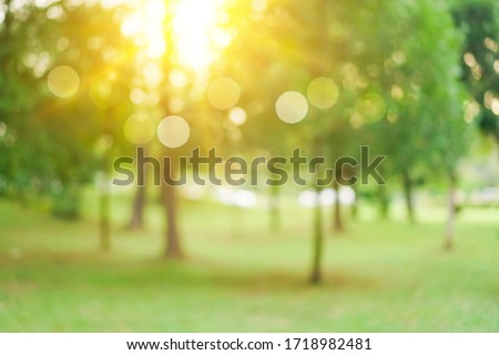 Blur nature bokeh green park by beach and tropical coconut trees in sunset time.