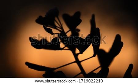 Sunet in the garden in springtime