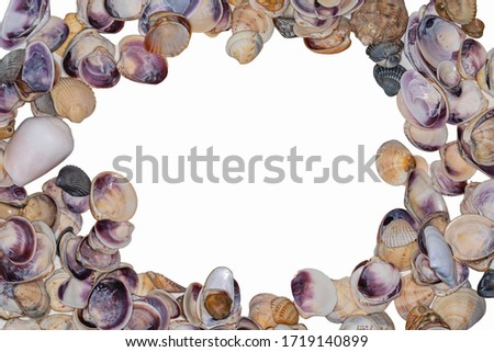 Beautiful picture frame made of shells for a summer mood. The concept of leisure vacation on the sea.