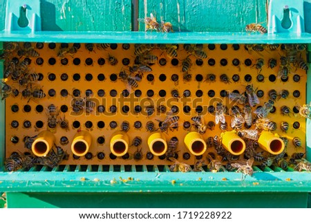 Collector of pollen on a hive. Bees with collected pollen enter the openings of Apiary pollen collector mounted on the hive. Pollen trap. harvesting in the apiary. #1719228922