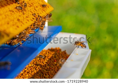 Collector of pollen on a hive. Bees with collected pollen enter the openings of Apiary pollen collector mounted on the hive. Pollen trap. harvesting in the apiary. Royalty-Free Stock Photo #1719228940