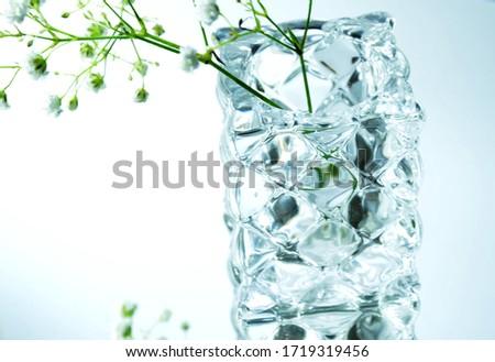 The Edelweiss Flower Pistil Shines #1719319456