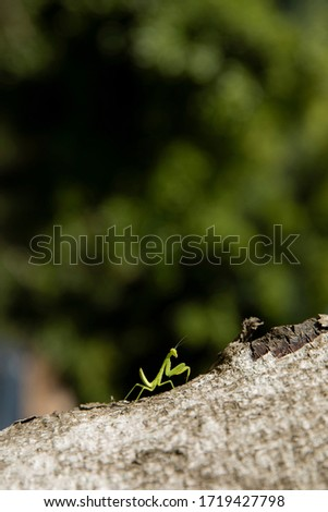 a green little mantis on a tree #1719427798
