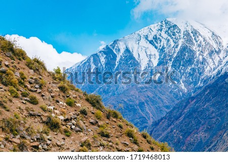 Landscape of Andes Mountains in a valey of Chile with blue sky, some clouds and amazing view of snowed top of the mountains, with mountaing goats over the hill. #1719468013