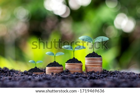 Coins and plants are grown on a pile of coins for finance and banking. The idea of saving money and increasing finances. Royalty-Free Stock Photo #1719469636