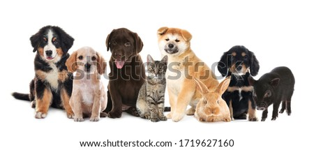 Collage with different adorable baby animals on white background. Banner design  #1719627160
