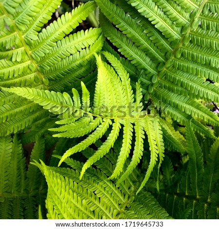 macro Photo of green fern petals. Stock photo  plant fern blossomed. Fern on the background of green plants. #1719645733