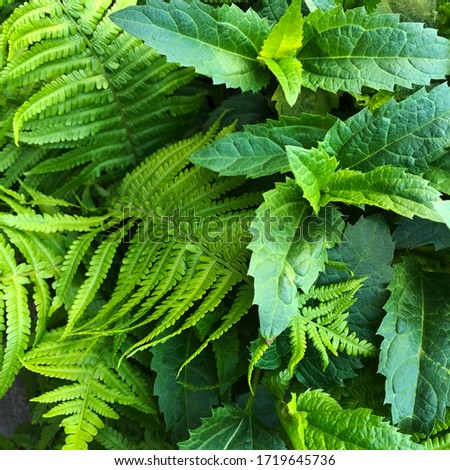 macro Photo of green fern petals. Stock photo  plant fern blossomed. Fern on the background of green plants. #1719645736