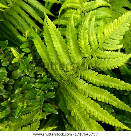 macro Photo of green fern petals. Stock photo  plant fern blossomed. Fern on the background of green plants. #1719645739