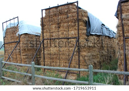 Hay baled and covered in silver tarps for winter feeding.  Golden brown hay neatly stacked with split rail fencing in the foreground and grey tarpaulins on top.   #1719653911