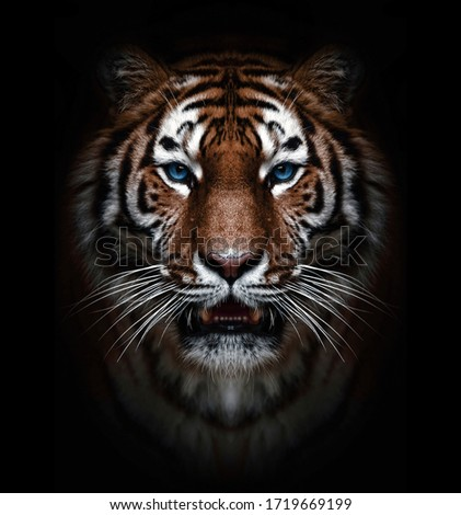 wild tiger head with blue eyes  #1719669199