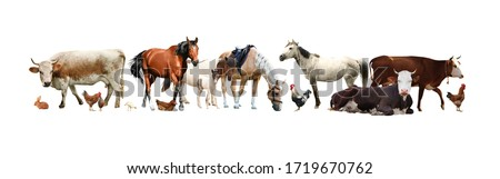 Collage of different farm animals on white background. Banner design Royalty-Free Stock Photo #1719670762