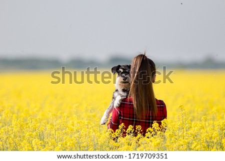 Rear view of pretty teenage girl holding cute dog miniature schnauzer in rapeseed with yellow blooming flowers in springtime #1719709351