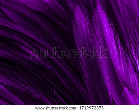 Beautiful abstract white and purple feathers on white background and soft white feather texture on white pattern and purple background, feather pink background , purple banners #1719972373