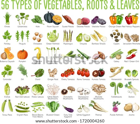 56 Vegetables icons - This collection includes 56 icons of colorful Vegetables roots and leaves #1720004260