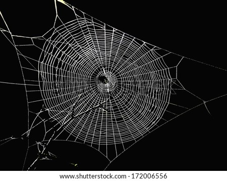 spider web in the dark Royalty-Free Stock Photo #172006556