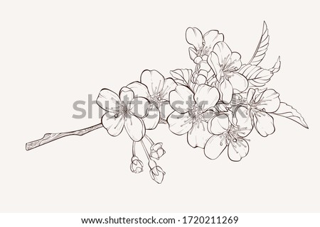 Sketch Floral Botany Collection. Apple tree branch with flower drawings. Hand Drawn Botanical Illustrations. #1720211269