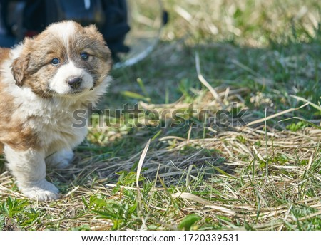 Puppy resting in the grass. Close up photo. Royalty-Free Stock Photo #1720339531