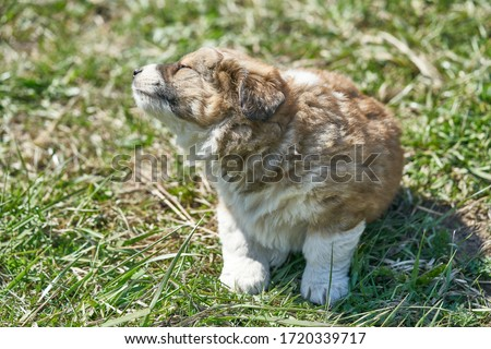 Puppy resting in the green grass. Close up photo. Royalty-Free Stock Photo #1720339717