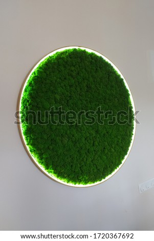 round picture of green decorative moss with LED lighting on the wall