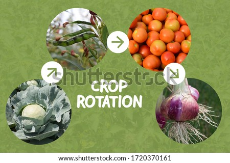 Collage Explaining Crop rotation concept in agriculture. Leaf, Legume, Fruit and Roots crops are planted in sequence to avoid exhausting the soil and to control weeds, pests, and diseases.
