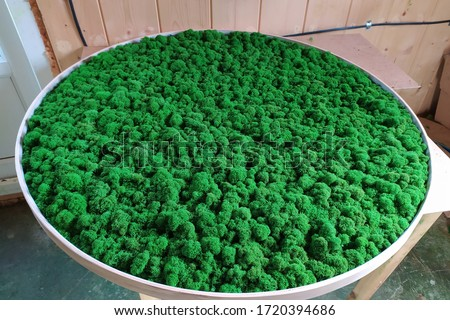round picture of green decorative moss