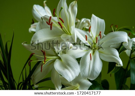 horizontal picture of a bunch of madonna lilies formed in a bouquet on light green sunny background at home