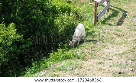 Goat in a wooden garden in nature