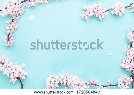 Sakura blossom flowers and may floral nature on blue background. For banner, branches of blossoming cherry against background. Dreamy romantic image, landscape panorama, copy space.