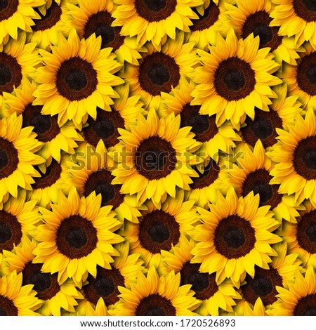 sunflowers flowers seamless pattern design background. Can be tiled