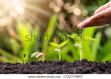 Growing crops on fertile soil and watering plants, including showing stages of plant growth, cropping concepts and investments for farmers. #1720714807