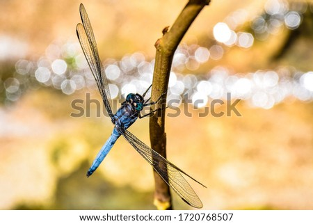 insect of dragonfly closeup picture