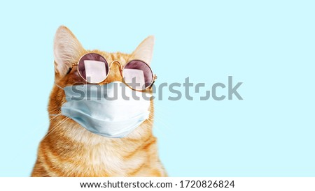 Closeup portrait of ginger cat wearing sunglasses and protective medical mask isolated on light cyan. Copyspace. #1720826824