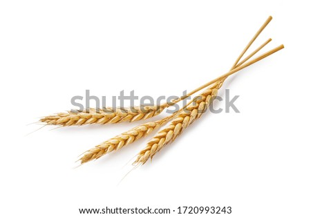Three wheat spikelets isolated on white background. Top view wheats. Royalty-Free Stock Photo #1720993243