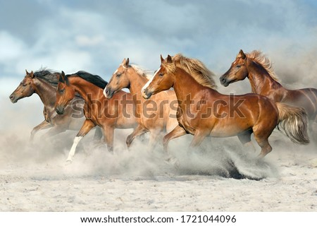 Horse herd  galloping on sandy dust against sky Royalty-Free Stock Photo #1721044096