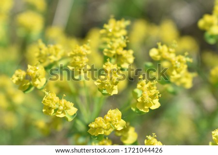 YELLOW BEAUTIFUL FLOWERS ON A BLURED BACKGROUND #1721044426