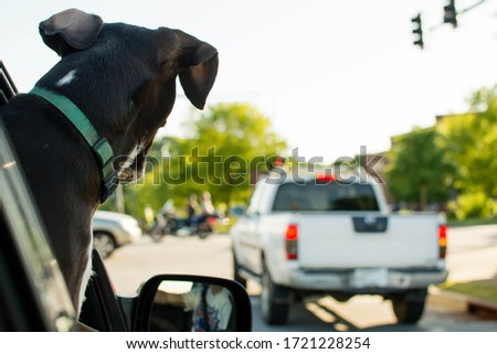 Brown rescue dog, pointer hound mix, hanging out the car window enjoying a ride through town. Relaxed and Carefree lifestyle. #1721228254