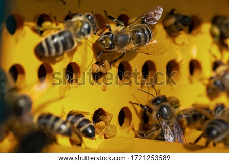 Collector of pollen on a hive. Bees with collected pollen enter the openings of Apiary pollen collector mounted on the hive. trap for collecting pollen pellets.  #1721253589