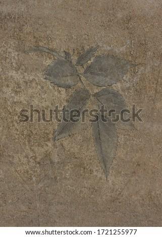 Leaf print on a rustly wall #1721255977