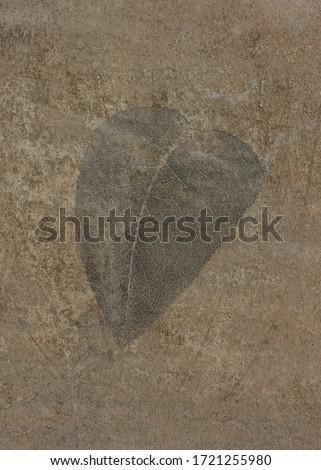 Leaf print on a rustly wall #1721255980