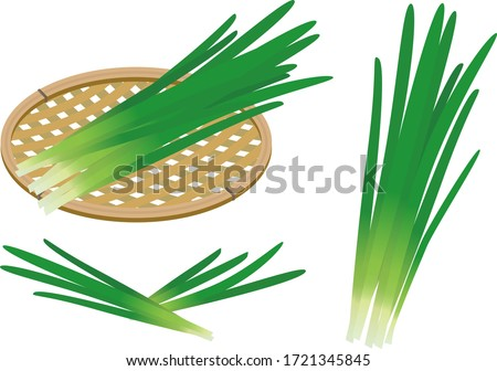 Illustration of two bunches of chives on a white background. #1721345845