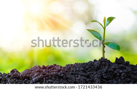 Agriculture and plant grow sequence with morning sunlight and green blur background. Germinating seedling grow step sprout growing from seed. Nature ecology and growth concept with copy space. #1721433436