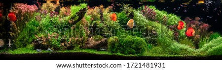 Aquarium with tropical fish jungle landscape with nature forest design and aquarium tank with variety plants fish drift wood rock and waterfall Royalty-Free Stock Photo #1721481931