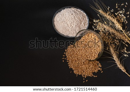 Dry Wheat Barley Plant Branches Grains and Flour on Isolated Black Background #1721514460
