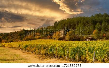 Vineyards in France, autumn, Drome,  wine Clairette de Die #1721587975