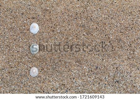 bullet point slide show presentation background beach scene with shells