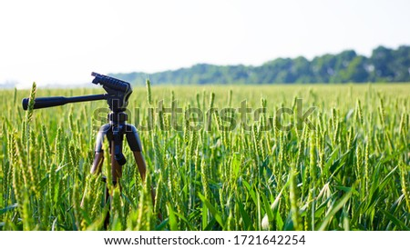 a tripod in the field planted with green young spikelets of wheat, landscape.
