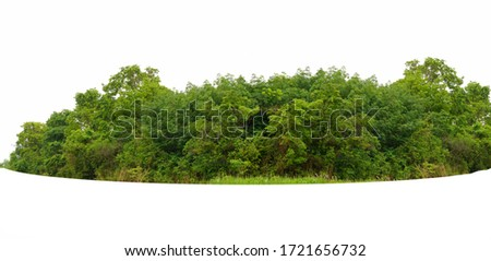 View of a High definition Treeline isolated on a white background #1721656732