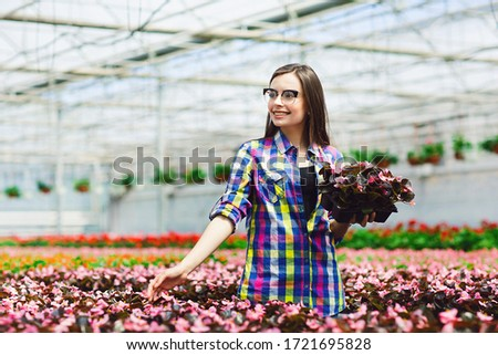 Beautiful smiling brunette in glasses, worker with flowers in greenhouse. Girl holding a pot of begonias flowers. Gardening concept #1721695828