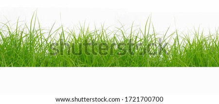 Green Grass Border isolated on white background.The collection of grass.(Manila Grass)The grass is native to Thailand is very popular in the front yard. #1721700700